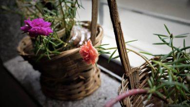 Photo of Inspirujte se: Závěsné truhlíky i samozavlažovací květináče
