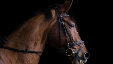 Photo of Jak vybrat udidlo pro koně? Důležitý není jen materiál